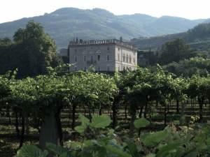 Veneto Winery