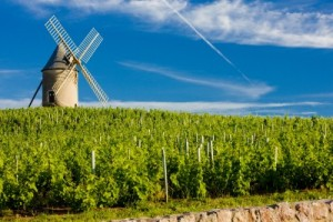 Beaujolais...Totally Old World