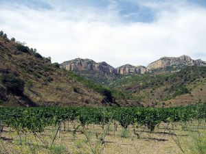 Vineyard in Priorat