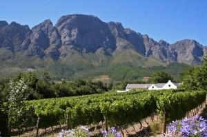 Boekenghoutskloug Winery