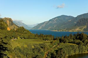 Vineyards in the Columbia River Gorge