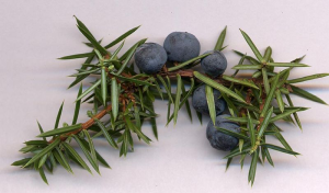 Fig 4-2 Juniper Berries