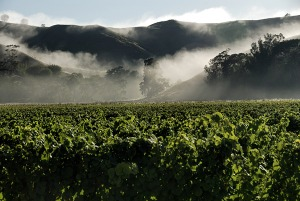 Vineyards in New Zealand's Gisborne/Poverty Bay area (photo via http://www.nzwine.com/)