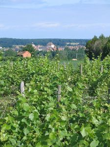 Vineyards in Châteaumeillant - Photo by Ameliris, via Wikimedia